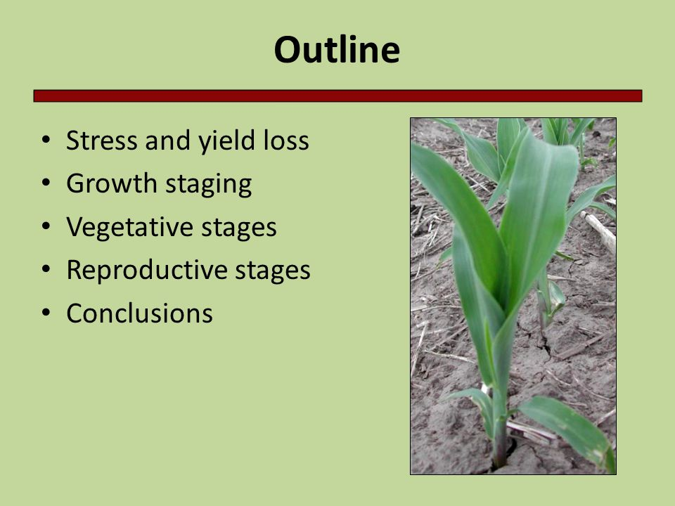 V10-VT – In late June and early July new leaves appear every 2-3 days – Hybrids & environment will cause variability in the total number of leaves V12-VT – Ear length - number of kernels per row - is determined over a wide range of time, from approx.