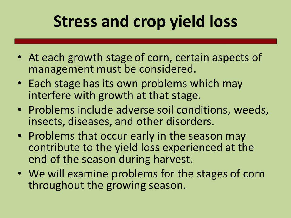 R2-Blister to R4-Dough Problems to watch for: – Foliar disease – Head smut – European corn borer – Grasshopper – Barren stalks, poor pollination – Nutrient deficiencies