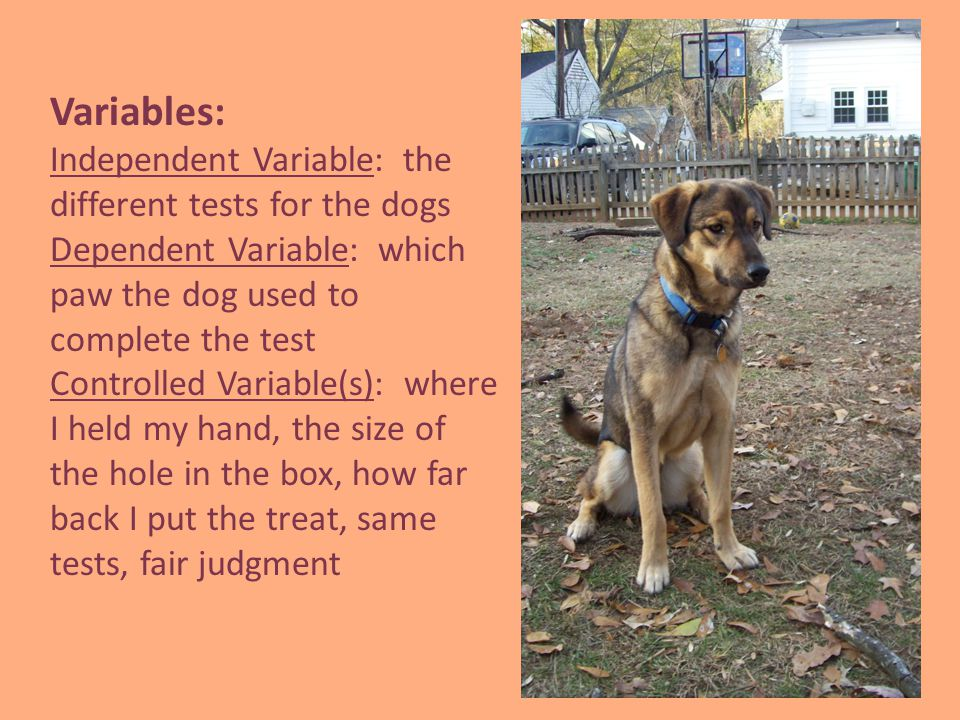 Variables: Independent Variable: the different tests for the dogs Dependent Variable: which paw the dog used to complete the test Controlled Variable(s): where I held my hand, the size of the hole in the box, how far back I put the treat, same tests, fair judgment