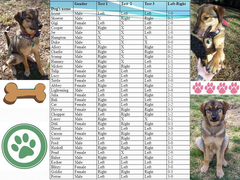Dog's name GenderTest 1Test 2Test 3Left-Right ScoutMaleLeft 3-0 SkeeterMaleXRight 0-2 GigiFemaleLeftX 2-0 CooperMaleRightXLeft1-1 JetMaleXXLeft1-0 HamptonMaleXXX0-0 DukeMaleXXX0-0 AlloryFemaleRightX 0-2 CharlieMaleRightX 0-2 ScampMaleRightX 0-2 HammyMaleRightXLeft1-1 MickeyMaleRight Left1-2 TulipFemaleRightLeft 2-1 LucyFemaleRightLeftRight1-2 TuttleFemaleLeft 3-0 AbbeyFemaleRightLeftRight1-2 LighteningMaleLeft 3-0 JuliaFemaleLeft Right2-1 BaliFemaleRightLeft 2-1 CatFemaleRightLeftRight1-2 FlowerFemaleRight 0-3 ChopperMaleLeftRight 1-2 LeroyMaleRightXX0-1 DeliFemaleRight 0-3 DieselMaleLeft 3-0 CarsonFemaleRight 0-3 ScoutMaleLeftRightLeft2-1 FredMaleLeft 3-0 HaskellMaleRight 0-3 PearlFemaleLeftX 2-0 BalueMaleRightLeftRight1-2 EscherMaleLeft 3-0 BlitzyFemaleLeft 3-0 GoldieFemaleRight 0-3 PotterMaleLeft 3-0