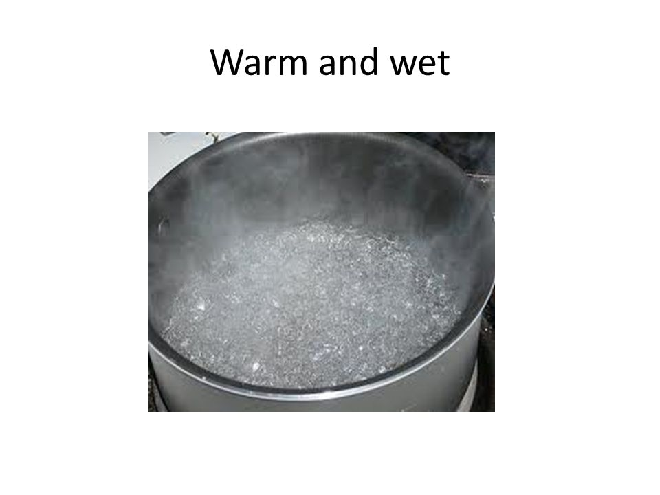 Warm and wet