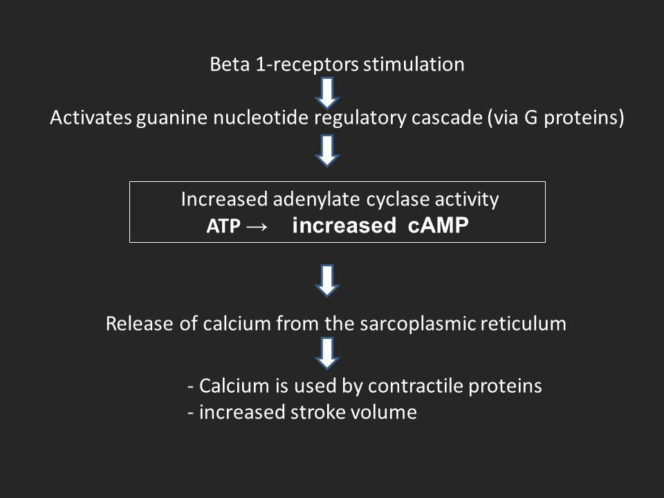 Beta 1-receptors stimulation Activates guanine nucleotide regulatory cascade (via G proteins) Increased adenylate cyclase activity ATP → increased cAM