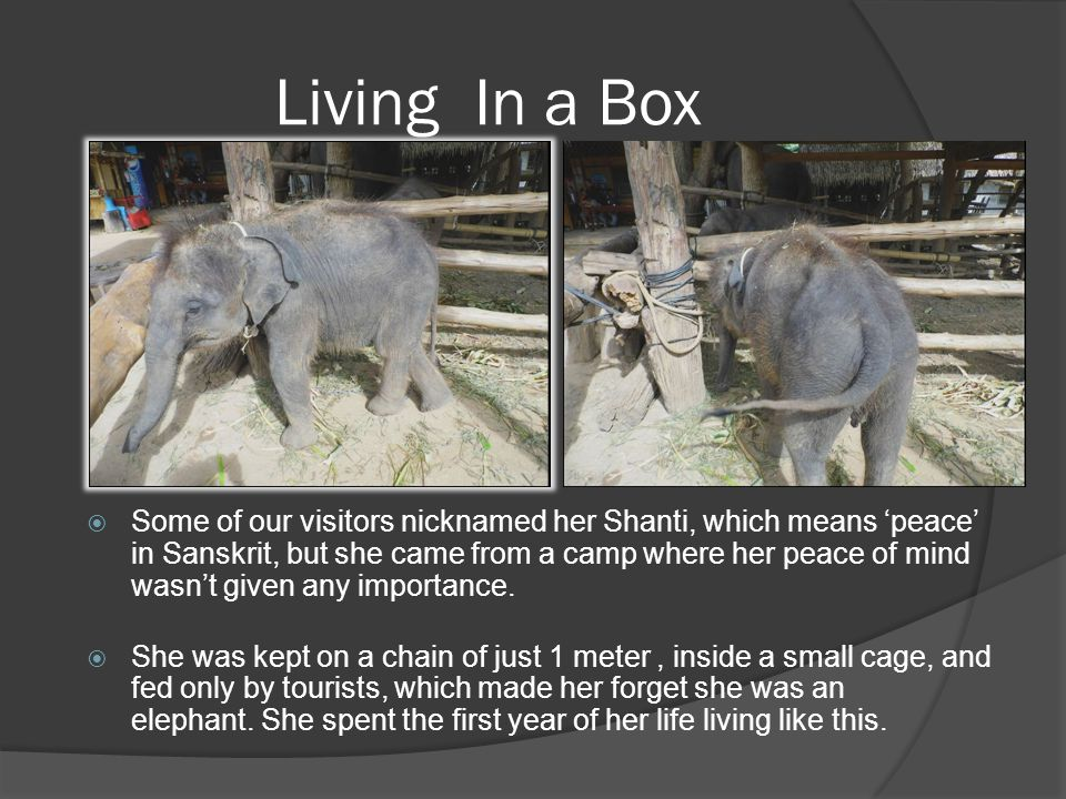 Living In a Box  Some of our visitors nicknamed her Shanti, which means 'peace' in Sanskrit, but she came from a camp where her peace of mind wasn't
