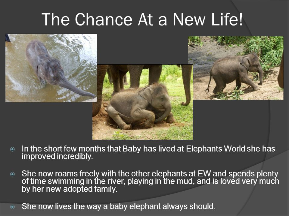Changing ElephantsWorld  Not only Baby has improved, EW itself has seen great changes since her arrival.