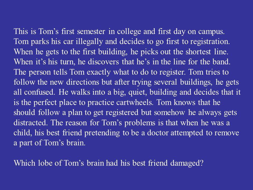 The temporal lobe.