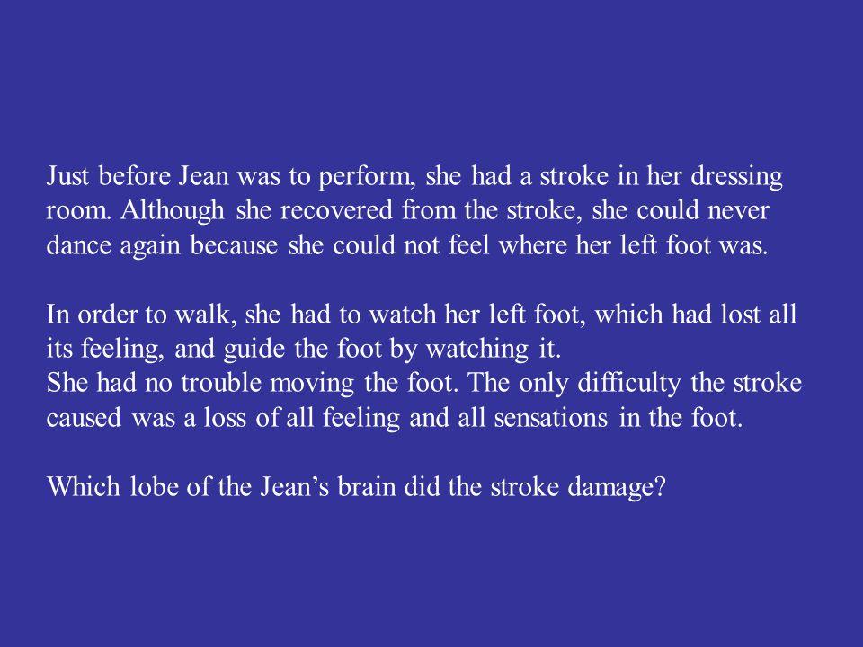 The occipital lobe.