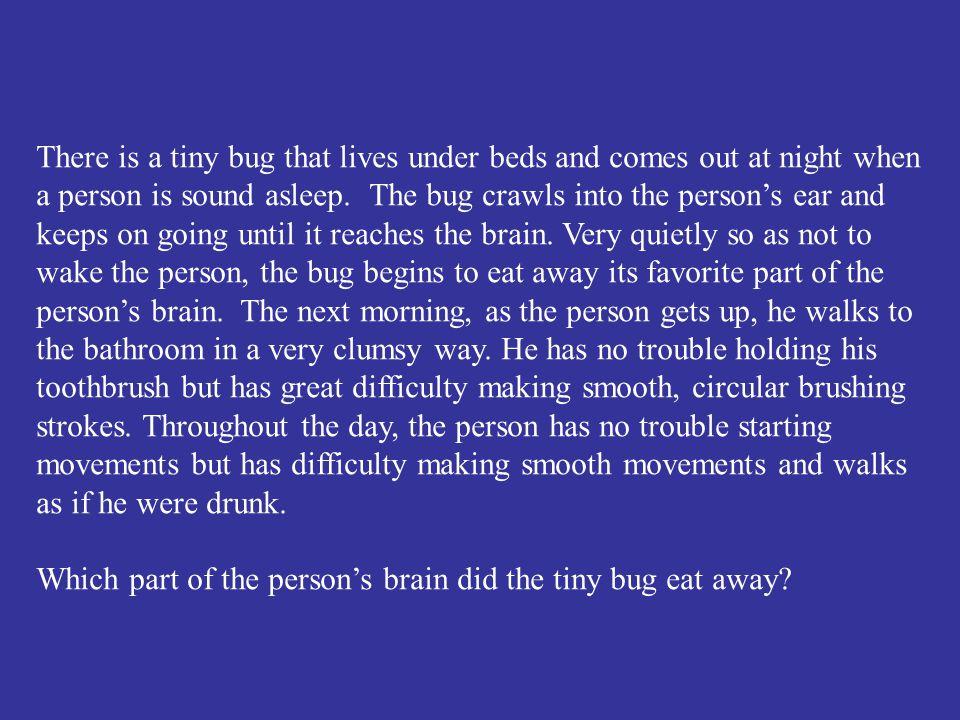 The brain stem.