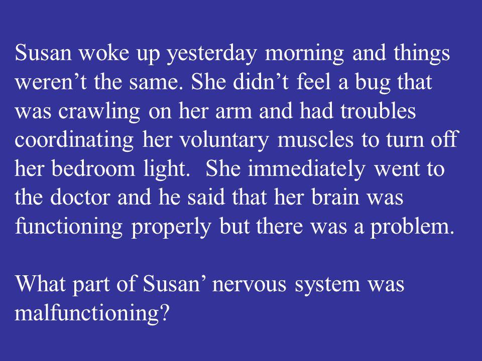 The parasympathetic nervous system.
