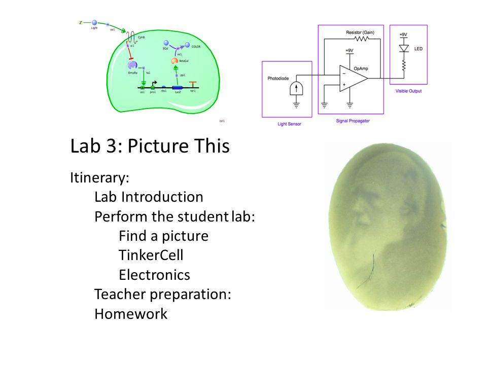 Lab 3: Picture This Itinerary: Lab Introduction Perform the student lab: Find a picture TinkerCell Electronics Teacher preparation: Homework