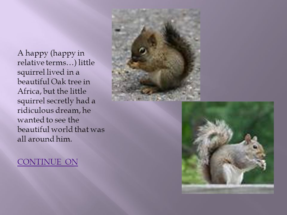 A happy (happy in relative terms…) little squirrel lived in a beautiful Oak tree in Africa, but the little squirrel secretly had a ridiculous dream, he wanted to see the beautiful world that was all around him.
