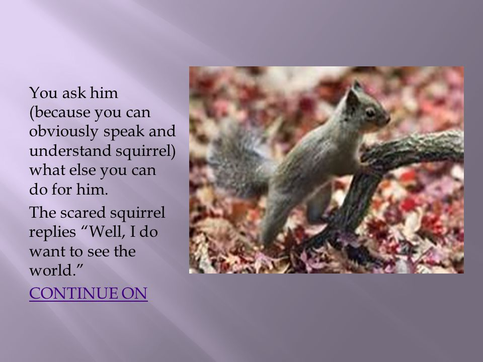 You ask him (because you can obviously speak and understand squirrel) what else you can do for him.
