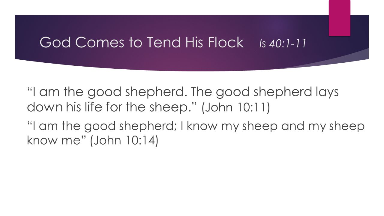 God Comes to Tend His Flock Is 40:1-11 I am the good shepherd.