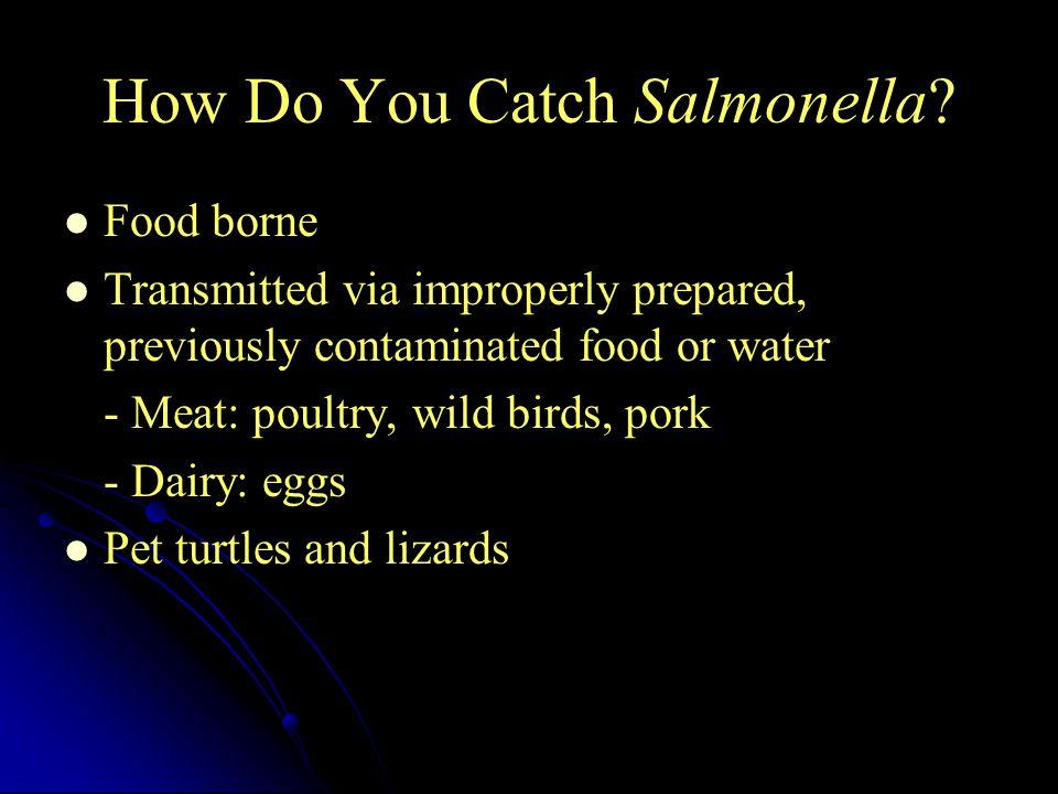 How Do You Catch Salmonella.