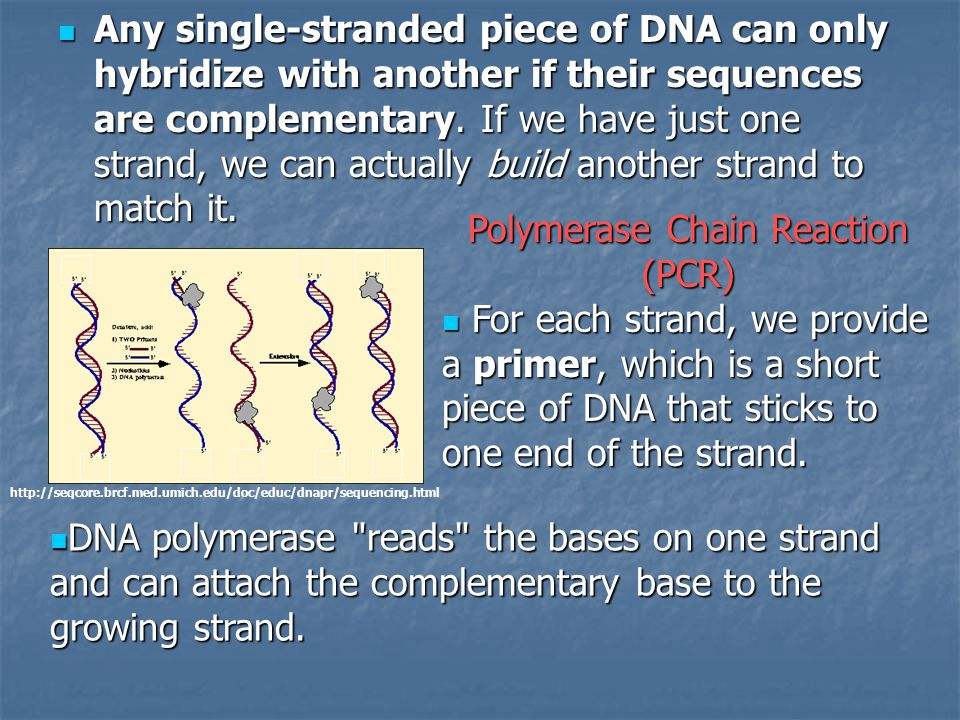 Any single-stranded piece of DNA can only hybridize with another if their sequences are complementary. If we have just one strand, we can actually bui