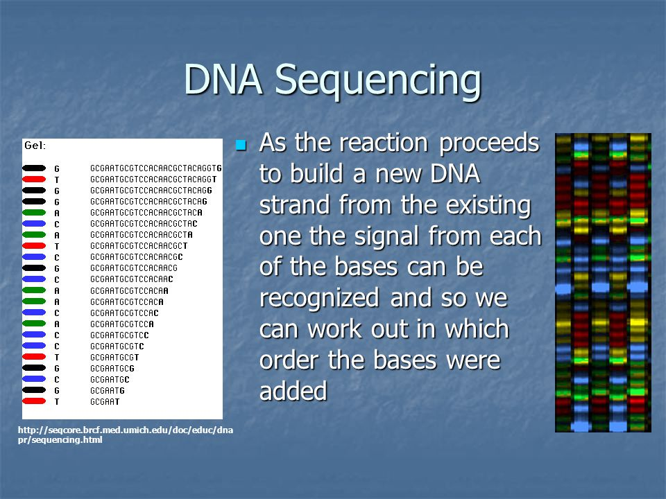 DNA Sequencing As the reaction proceeds to build a new DNA strand from the existing one the signal from each of the bases can be recognized and so we