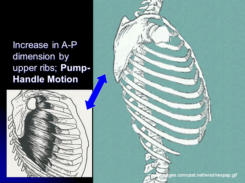 Increase in A-P dimension by upper ribs; Pump- Handle Motion mywebpages.comcast.net/wnor/respap.gif