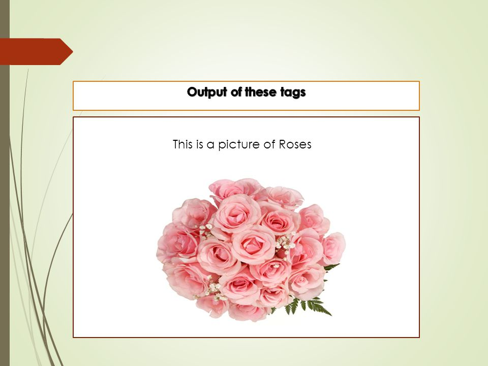 This is a picture of Roses