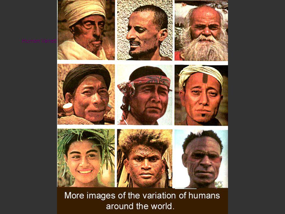 Human Variation II