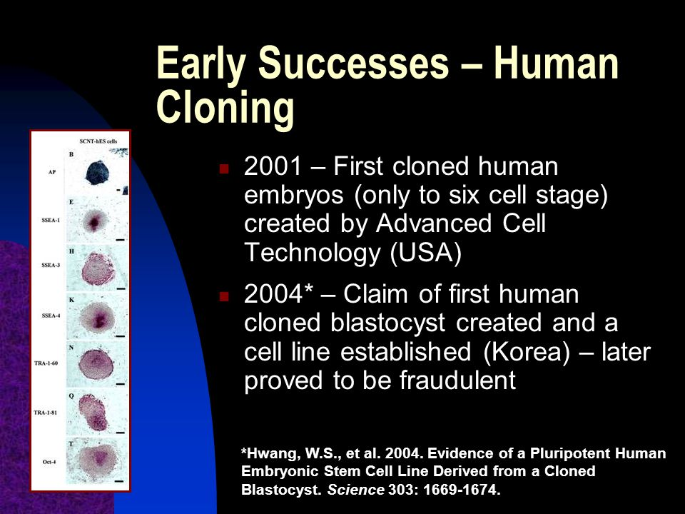 Early Successes – Human Cloning 2001 – First cloned human embryos (only to six cell stage) created by Advanced Cell Technology (USA) 2004* – Claim of