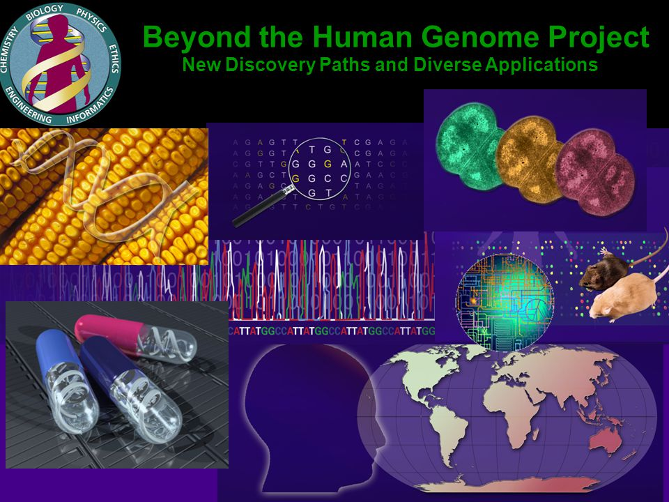 Diverse Applications of DNA Data and Technologies Medicine Energy Environment Agriculture Identification Bioanthropology