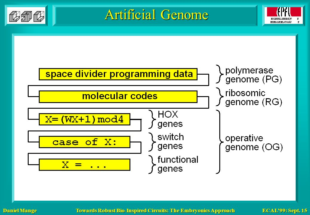 Daniel Mange ECAL'99: Sept. 15 Towards Robust Bio-Inspired Circuits: The Embryonics Approach Artificial Genome