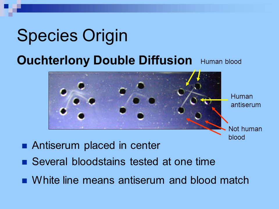 Species Origin Antiserum placed in center Ouchterlony Double Diffusion Several bloodstains tested at one time White line means antiserum and blood mat