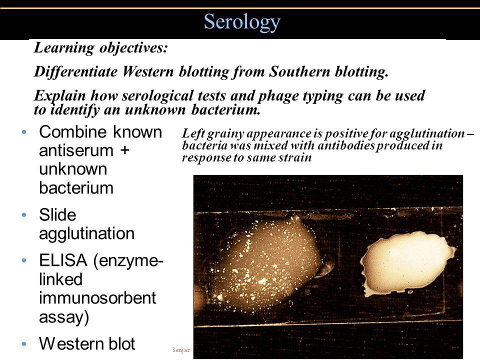 Copyright © 2004 Pearson Education, Inc., publishing as Benjamin Cummings Combine known antiserum + unknown bacterium Slide agglutination ELISA (enzym