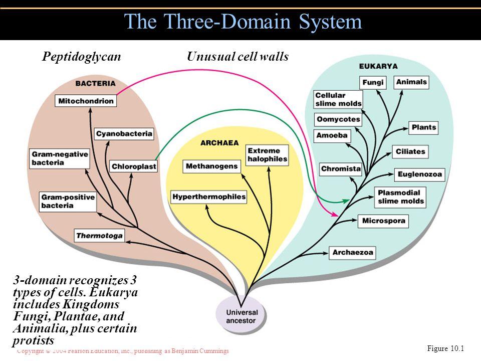 Copyright © 2004 Pearson Education, Inc., publishing as Benjamin Cummings The Three-Domain System Figure 10.1 3-domain recognizes 3 types of cells. Eu