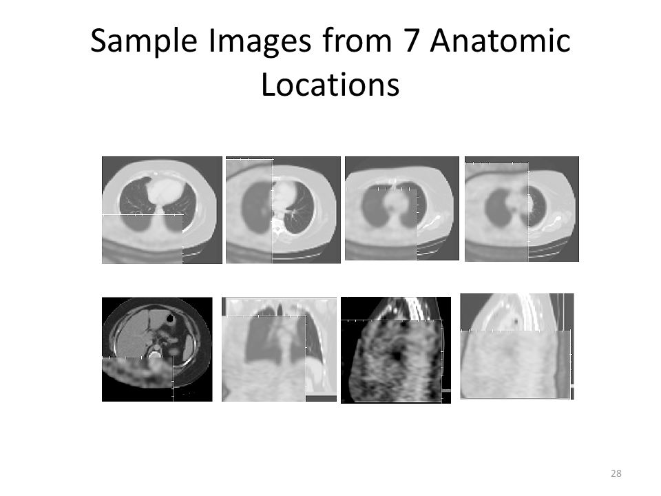 Sample Images from 7 Anatomic Locations 28
