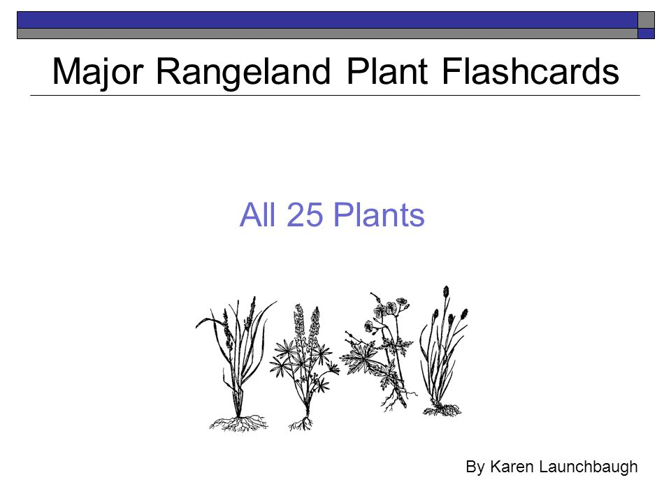 All 25 Plants Major Rangeland Plant Flashcards By Karen Launchbaugh