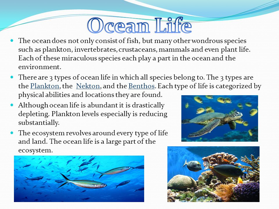 The topic I will be speaking about today will be The Ocean. I will speak about the importance of the ocean and why we need to keep it safe from pollut