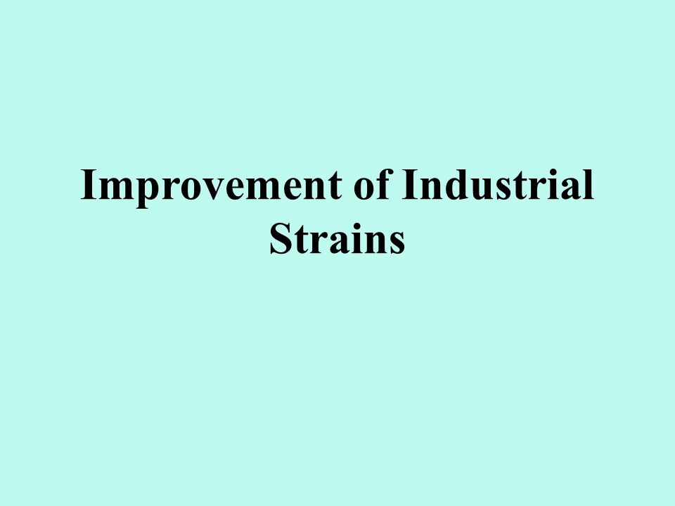 Improvement of Industrial Strains