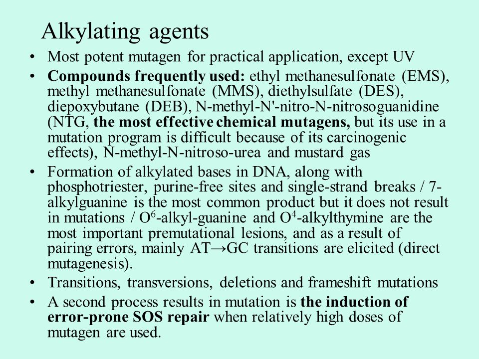Alkylating agents Most potent mutagen for practical application, except UV Compounds frequently used: ethyl methanesulfonate (EMS), methyl methanesulfonate (MMS), diethylsulfate (DES), diepoxybutane (DEB), N-methyl-N -nitro-N-nitrosoguanidine (NTG, the most effective chemical mutagens, but its use in a mutation program is difficult because of its carcinogenic effects), N-methyl-N-nitroso-urea and mustard gas Formation of alkylated bases in DNA, along with phosphotriester, purine-free sites and single-strand breaks / 7- alkylguanine is the most common product but it does not result in mutations / O 6 -alkyl-guanine and O 4 -alkylthymine are the most important premutational lesions, and as a result of pairing errors, mainly AT→GC transitions are elicited (direct mutagenesis).