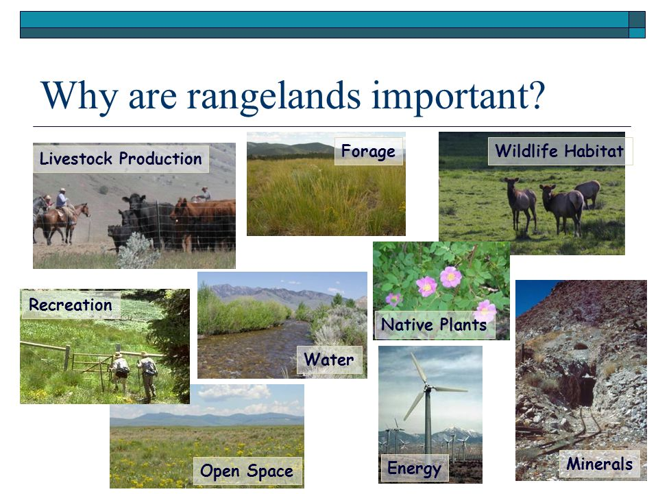 Forage Recreation Livestock Production Open Space Native Plants Water Wildlife Habitat Why are rangelands important.