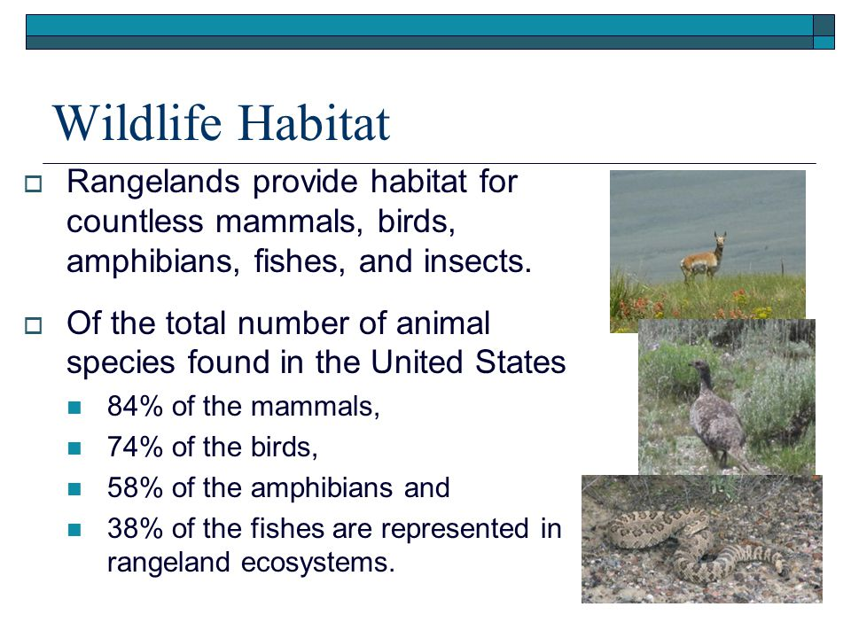 Wildlife Habitat  Rangelands provide habitat for countless mammals, birds, amphibians, fishes, and insects.
