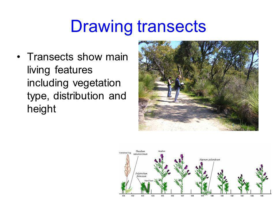 Drawing transects Transects show main living features including vegetation type, distribution and height
