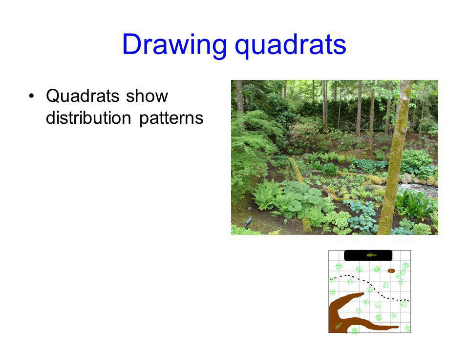 Drawing quadrats Quadrats show distribution patterns