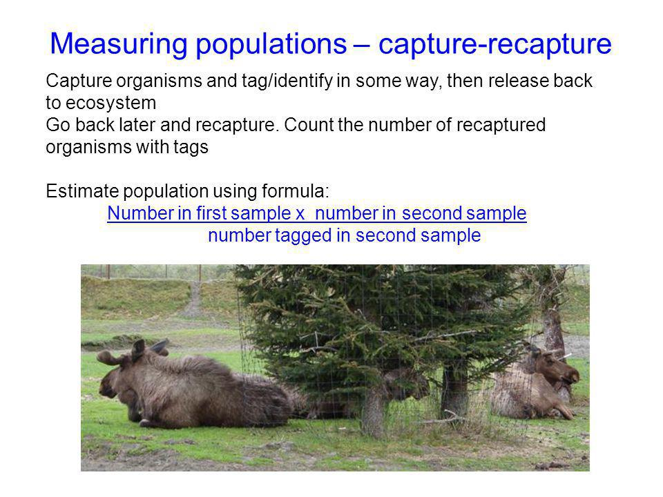 Measuring populations – capture-recapture Capture organisms and tag/identify in some way, then release back to ecosystem Go back later and recapture.