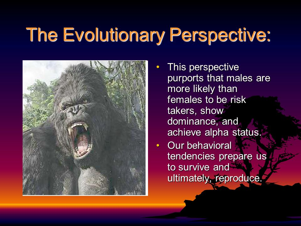 The Evolutionary Perspective: This perspective purports that males are more likely than females to be risk takers, show dominance, and achieve alpha s