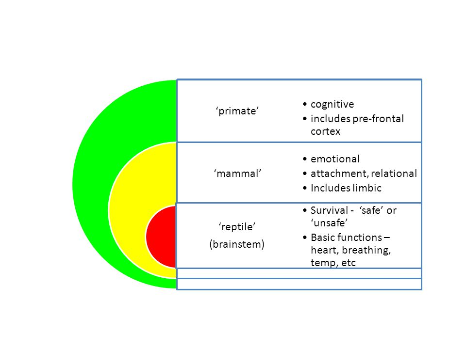 'primate' 'mammal' 'reptile' (brainstem) cognitive includes pre-frontal cortex emotional attachment, relational Includes limbic Survival - 'safe' or 'unsafe' Basic functions – heart, breathing, temp, etc 'primate' 'mammal' 'reptile' (brainstem) cognitive includes pre-frontal cortex emotional attachment, relational Includes limbic Survival - 'safe' or 'unsafe' Basic functions – heart, breathing, temp, etc