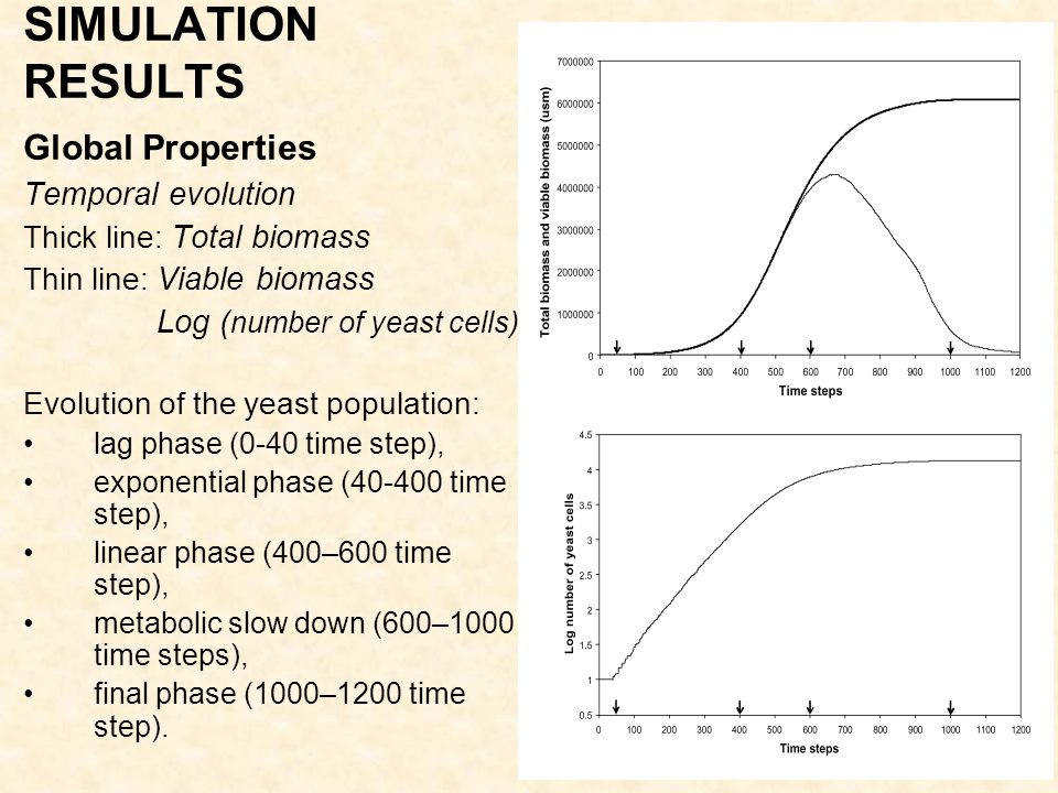 5 SIMULATION RESULTS Global Properties Temporal evolution Thick line: Total biomass Thin line: Viable biomass Log ( number of yeast cells) Evolution of the yeast population: lag phase (0-40 time step), exponential phase (40-400 time step), linear phase (400–600 time step), metabolic slow down (600–1000 time steps), final phase (1000–1200 time step).