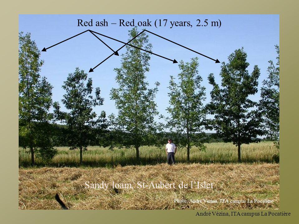 Red ash – Red oak (17 years, 2.5 m) Sandy loam, St-Aubert de l'Islet