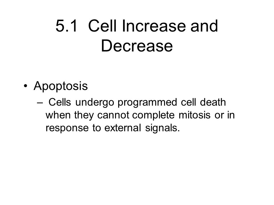 5.1 Cell Increase and Decrease Apoptosis – Cells undergo programmed cell death when they cannot complete mitosis or in response to external signals.