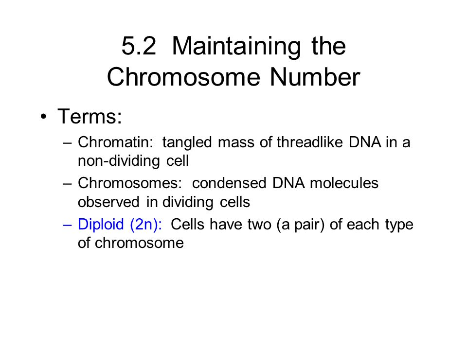 5.2 Maintaining the Chromosome Number Terms: –Chromatin: tangled mass of threadlike DNA in a non-dividing cell –Chromosomes: condensed DNA molecules o
