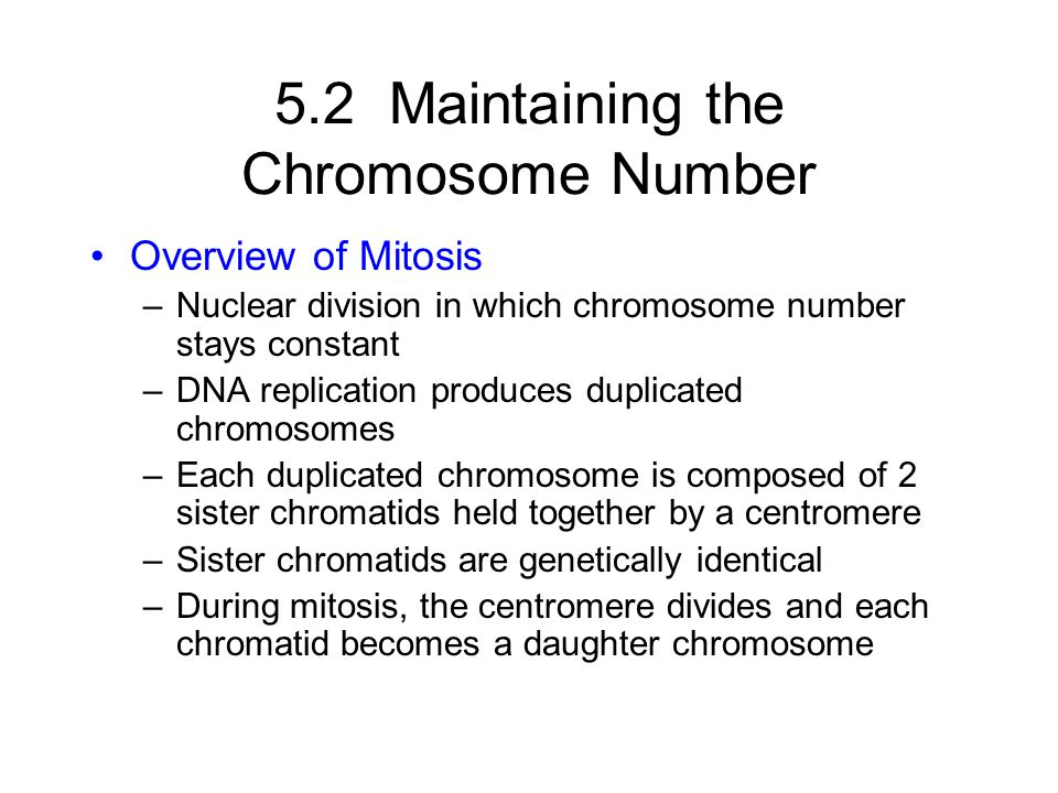 5.2 Maintaining the Chromosome Number Overview of Mitosis –Nuclear division in which chromosome number stays constant –DNA replication produces duplic