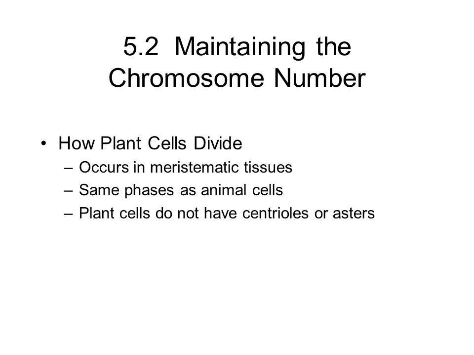 5.2 Maintaining the Chromosome Number How Plant Cells Divide –Occurs in meristematic tissues –Same phases as animal cells –Plant cells do not have cen