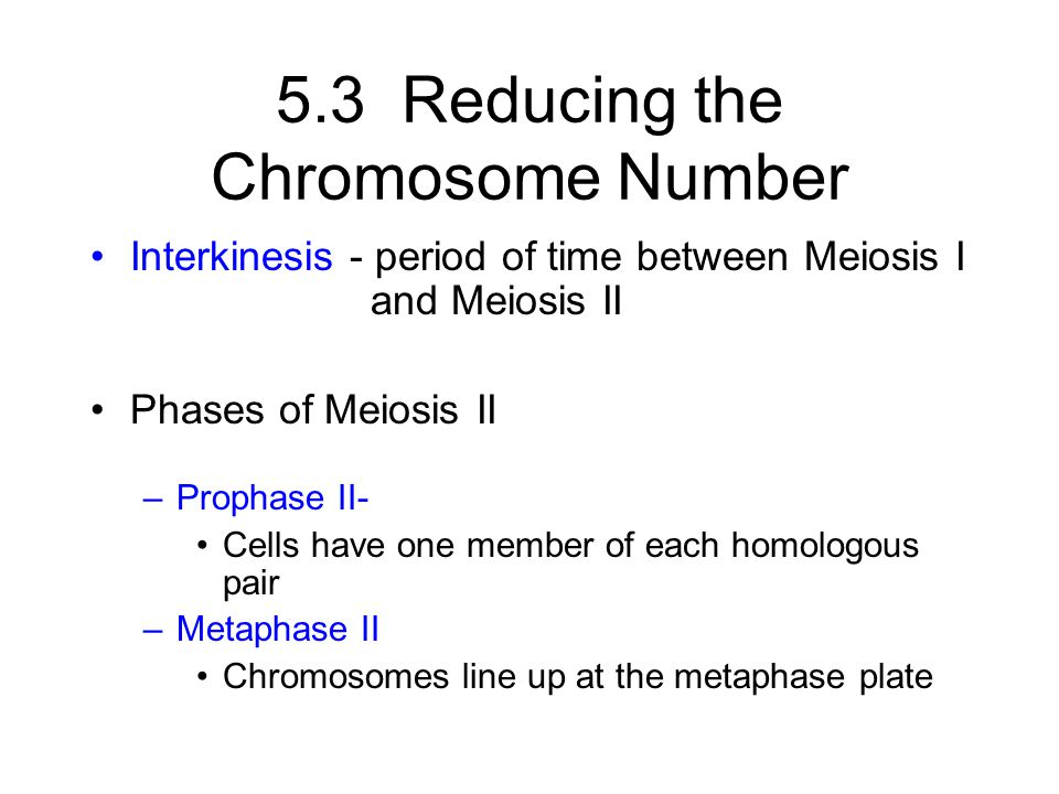5.3 Reducing the Chromosome Number Interkinesis - period of time between Meiosis I and Meiosis II Phases of Meiosis II –Prophase II- Cells have one me