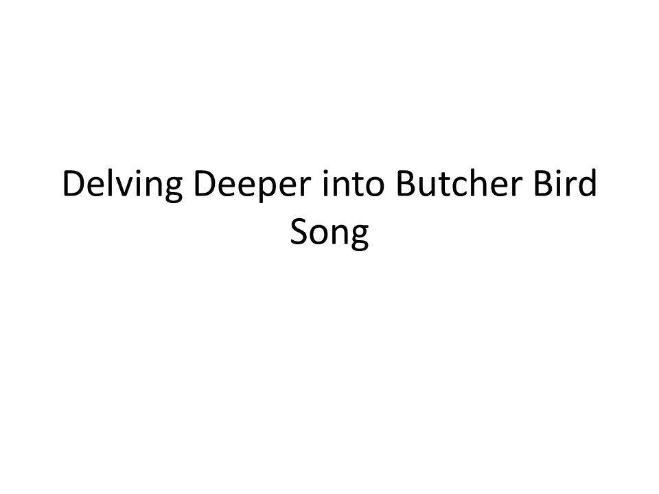 Delving Deeper into Butcher Bird Song