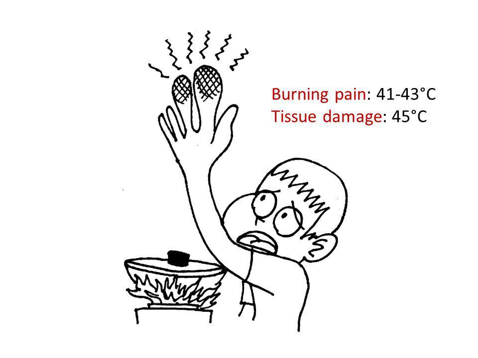 Burning pain: 41-43°C Tissue damage: 45°C