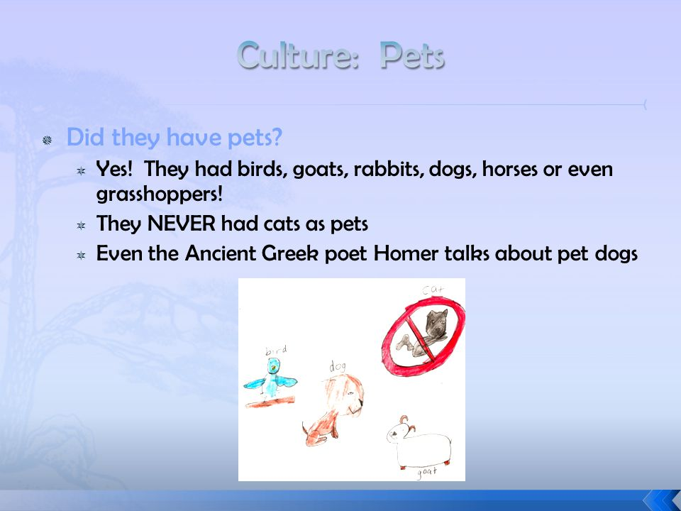  Did they have pets?  Yes! They had birds, goats, rabbits, dogs, horses or even grasshoppers!  They NEVER had cats as pets  Even the Ancient Greek